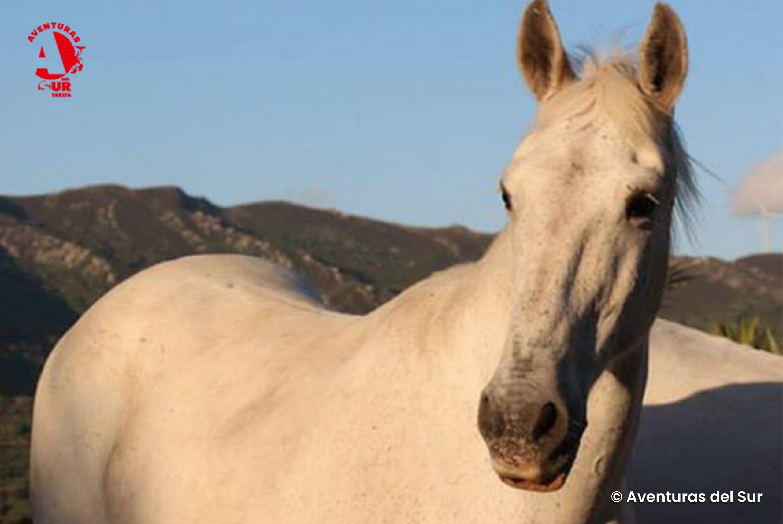 Senderismo, yoga y rutas a caballo