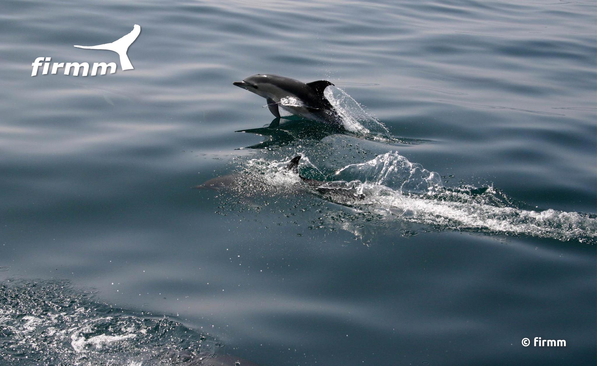 Avistamiento de cetáceos | firmm